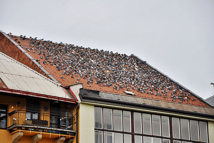 A2B Pest Control are able to install spikes to deter birds from roofs in Brondesbury.