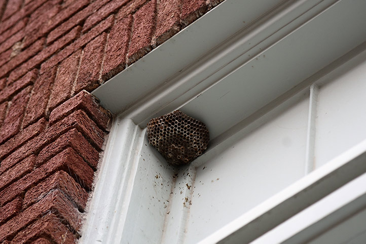 We provide a wasp nest removal service for domestic and commercial properties in Brondesbury.